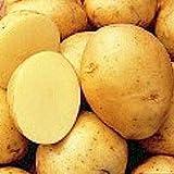 5 lb. SEED POTATOES - Yukon Gold - Organic - ORDER NOW for FALL PLANTING