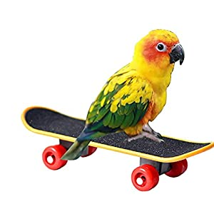 Bird Parrots Skateboard Bird Parrot Toys – Small and Medium Parrot Skateboard Toys Scrub Scooter Skate Boarding – Bird Parrot Mini Plastic Training Toy for Foot Grasping Hand Clawing Grabbing Biting