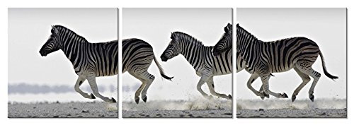 zebra bathroom pictures - 3