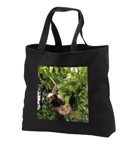 Danita Delimont - Wildlife - Panama, Panama City, Three-toed Sloth wildlife - SA15 CZI0561 - Christian Ziegler - Tote Bags - Black Tote Bag JUMBO 20w x 15h x 5d - Beach Panama Shopping City