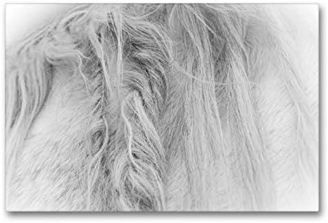 Calvendo Premium Lienzo 90 cm x 60 cm Horizontal, un Motivo del Calendario Emocional: Caballos Blancos en Blanco y Negro. Imagen sobre Lienzo, impresión en Lienzo, Animales