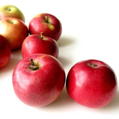 Dwarf McIntosh Apple Trees
