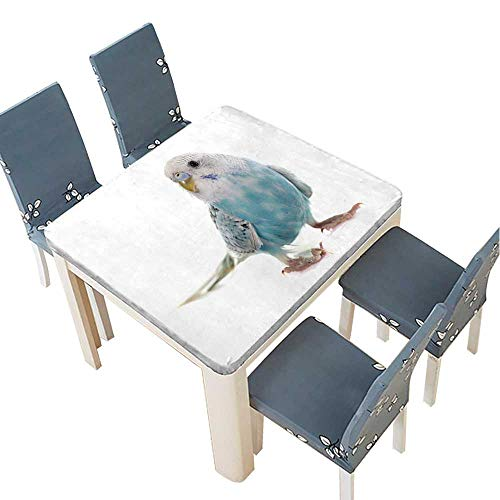 PINAFORE Indoor/Outdoor Spillproof Tablecloth Common pet Parakeet in Front of White Background Wedding Restaurant Party Decoration 37.5 x 37.5 INCH (Elastic Edge)
