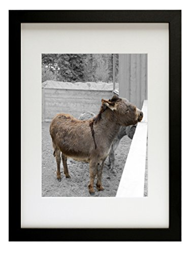 Golden State Art Simple and Stylish Picture Frame with Ivory Color Mat & Real Glass (12x16, Black) (Art Glass State Frame)