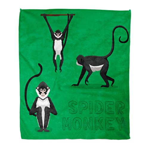 Spider Monkey Front - Golee Throw Blanket Brown Animal Spider Monkey Cartoon Ape Character Endangered Forest Front 50x60 Inches Warm Fuzzy Soft Blanket for Bed Sofa