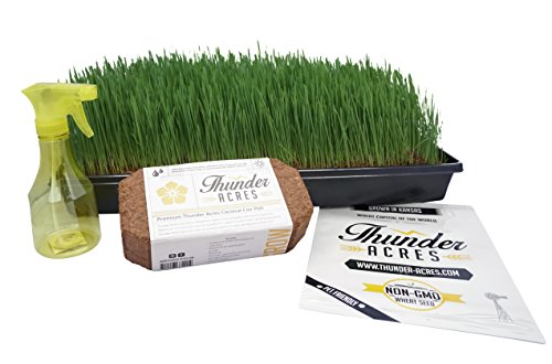 Complete Wheatgrass Growing Kit, Colored trays, Organic Soil, Fertilizer, Seed, Spray bottle, Instructions. (Black) ()