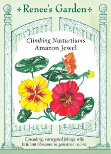 - Nasturtium - Climbing Amazon Jewel Seeds
