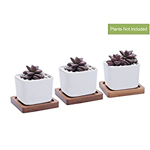 Succulent Plant Pots With Bamboo Tray/ 2Inch Cute White Ceramic Decorative Plant Pots Pack of 3