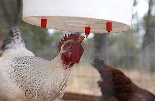 Chicken Water Feeder Poultry Nipple Drinker Duck Hen Screw