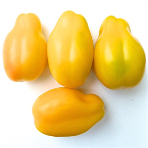 Yellow Bell Heirloom Tomato, 20 Seeds (Yellow Bell Tomato Seeds compare prices)