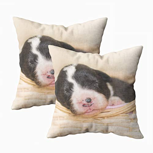 Anucky Pillow Covers,Throw Pillow Cases, Adorable Cute Old Newborn Black White Border Puppy for Your Home Printed with Fashion Pattern Soft Case for Bedroom 18x18Inch 2Pack Decorative Pillow Covers ()