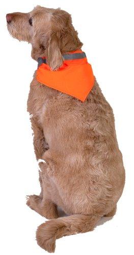 Dog Not Gone Visibility Products Collar (Orange Dog Bandana)