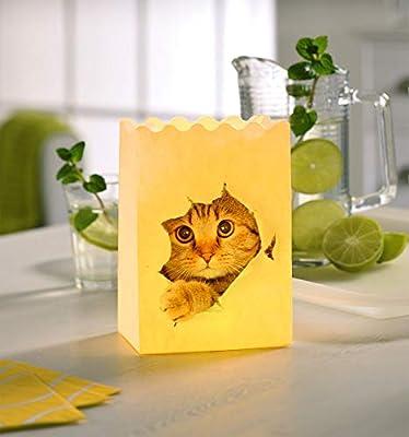 Bolsa de Luz Luminaria de gato - 4 piezas, portavelas, papel ...