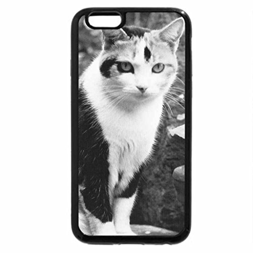 iPhone 6S Case, iPhone 6 Case (Black & White) - Calico cat