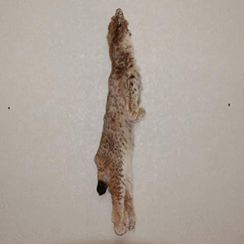 StoreTaxidermy LLC (Taxidermy Studio) Eurasian Lynx Tanned Fur PELT - NOT Bobcat Skin, Hide for Sale - Real, Decor, Genuine - ST4693