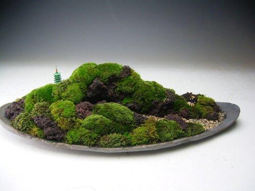 苔の遠山 盆景(709668) B00AQGDO1K