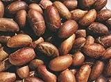 Bitter Kola Nut Garcinia Kola Cola 1 Lb