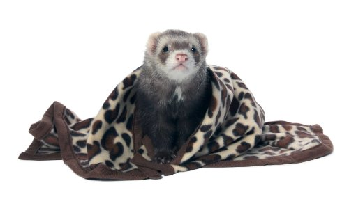 Marshall Designer Fleece Blanket for Ferrets, Pattern Fleece ()