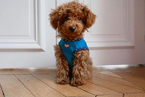 Sewing Pattern for a Dog Harness