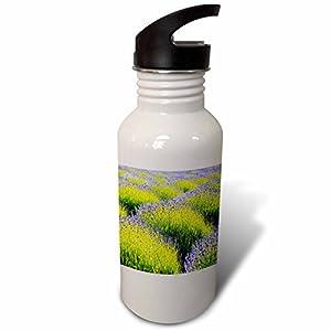 3dRose Danita Delimont - Flowers - USA, Washington State, Port Angeles, Lavender Field - Flip Straw 21oz Water Bottle (wb_279708_2)
