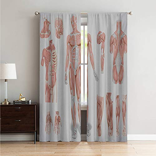 Mozenou Microfiber Window Panel Pair Kitchen Curtain Human Anatomy,Inner Muscle System Skin Structure with Cells Biology Health Medical Display,Coral Grey W84 x L84 Inch ()