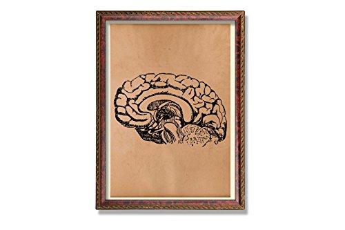 Antique brain art print Vintage anatomy poster Medical decor