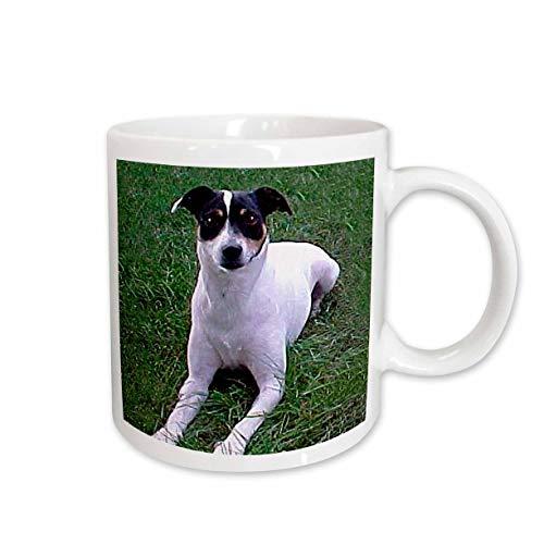 3dRose Rat Terrier Mug, 15-Ounce
