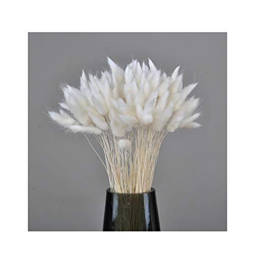 (yuexianghui 1 Pack(50 Head) Natural Decorative Dried Flower Colorful Rabbit Tail Cute Bunny Flowers for Home,White)