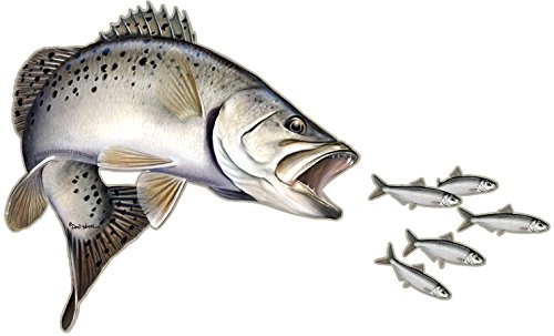 Aquatic Addiction Speckled Sea Trout Fishing Decal Sticker (Sea Trout Decal)