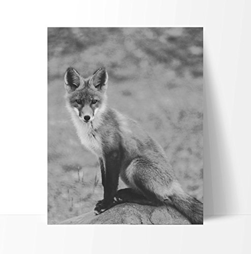 Clever Desert Fox #2 Poster Print, 11 x 14 Inches, Black White Grey Color, Wall Decor for the Home, Office, Classroom, Dorm Room, Living Room, Bedroom, Dining, Bathroom (Unframed)