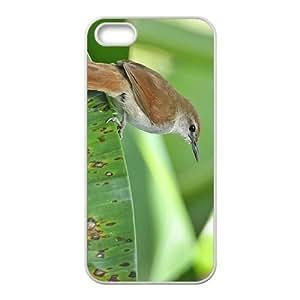 Passer Griseus Hight Quality Plastic Case for Iphone 5s