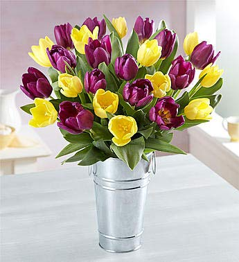 1800Flowers Spring Passion Purple and Yellow Tulips Fresh Flower Bouquet with French Flower Pail (30 Tulips)