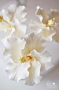 200 pcs 24 colors bonsai Hibiscus Flower Seeds Hardy ,Mix Color, DIY Home Garden potted flower plant,bonsai seed flower