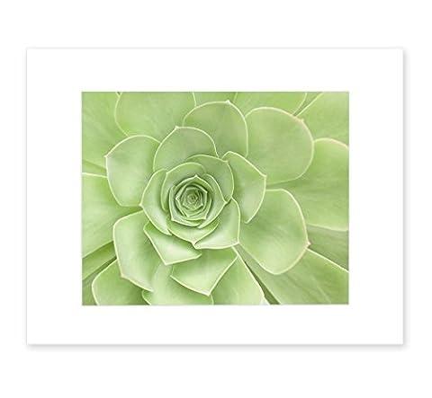 Green Wall Art, Green Art Print, Succulent Flower, Bathroom Wall Art, Floral Wall Decor, Botanical Print, Sage Green Art, 8x10 Matted Print, 'Succulent - Alternative Wall Art