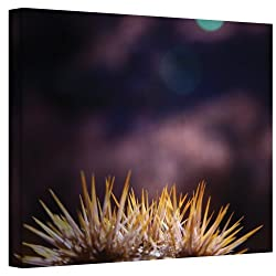 Art Wall Obviousness Has It's Advantages Wrapped Canvas Art By Mark Ross, 24 By 32-inch