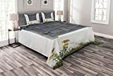 Lunarable Shutters Bedspread Set Queen Size, Countryside Ancient House Closed Window Antique Rustic Nostalgic Style Design, Decorative Quilted 3 Piece Coverlet Set with 2 Pillow Shams, Charcoal White