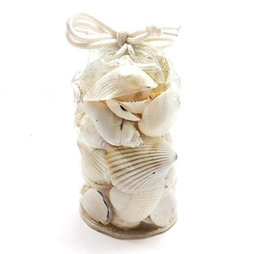 (PEPPERLONELY White Sea Shells Assortment, Various Sizes,1 Inch to 2 Inch, 9 OZ Bag of Approx. 55 PC+ Shells)