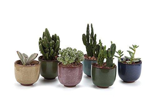 Succulent container garden ideas car interior design for Cactus in pots ideas