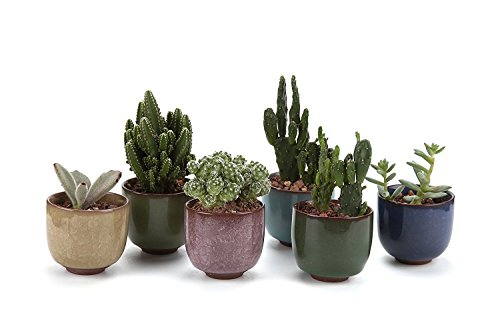 T4U 2.5 Inch Ceramic Ice Crack Zisha Raised Serial succulent Plant Pot/Cactus Plant Pot Flower Pot/Container/Planter Full colors Package 1 Pack of 6