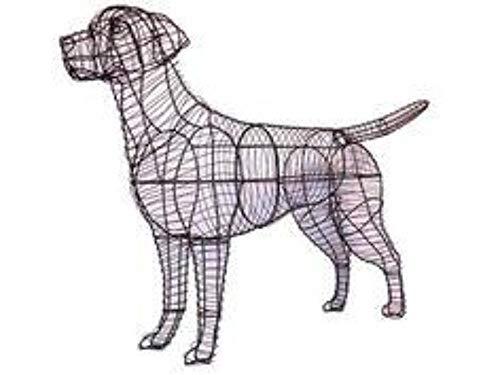 Labrador Retriever 41