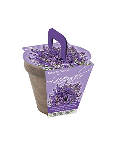 TotalGreen Holland Grow Fresh Lavender Seeds in basalt pot Indoor   Great Gift Item   Grow Your Own Lavender From Seed   Non-GMO Lavender Starter Kit With Easy Instructions   Exclusive Germination Kit by TotalGreen Holland (Image #2)