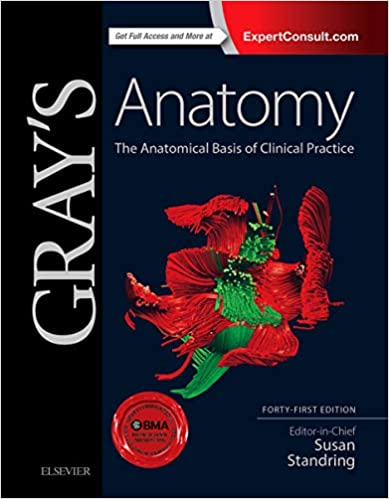 diagram of grey\'s anatomy gray s anatomy the anatomical basis of clinical practice  anatomical basis of clinical practice