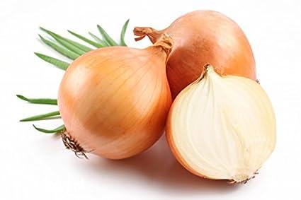 Cebolla Ailsa Craig - bulbos gigantes - SEMILLAS RECUBIERTAS - semilla