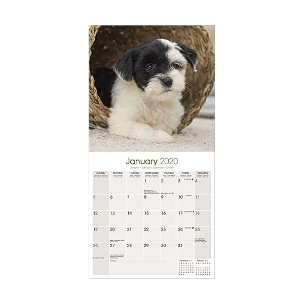 Tibetan Terrier Calendar - Dog Breed Calendars - 2019 - 2020 Wall Calendars - 16 Month by Avonside 2