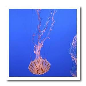 ht_88345_1 Danita Delimont - California - Jellyfish, Monterey Bay Aquarium, California - US05 DFR0360 - David R. Frazier - Iron on Heat Transfers - 8x8 Iron on Heat Transfer for White Material