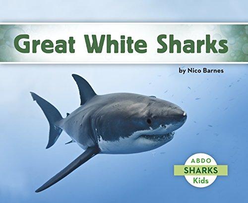 Great White Shark (Sharks)