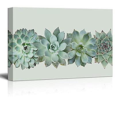Closeup of Succulent Plants Gallery - Canvas Art Wall Art - 24