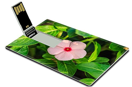 Luxlady 32GB USB Flash Drive 2.0 Memory Stick Credit Card Size beautiful wild flower in forest nature background IMAGE - Wildflower Ironman