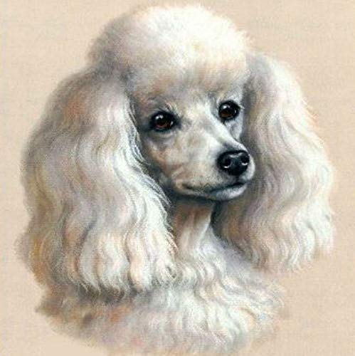 YUMEART Cute Poodle Full Drill Square Diamond Embroidery Cross Stitch Lovely Dog Diamond Mosaic Pictures of Rhinestones ()