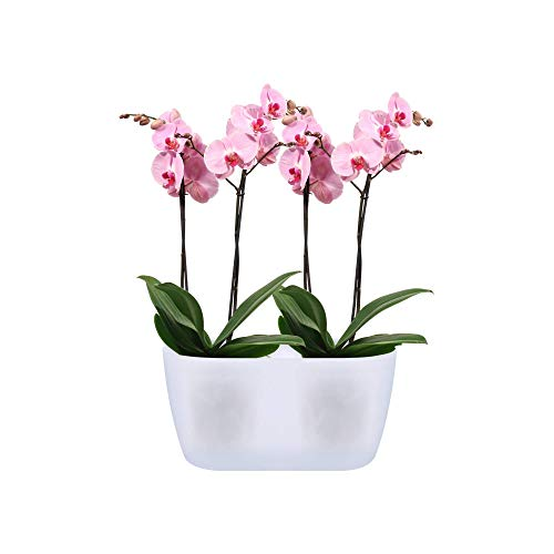 Elho Brussels Orchid Duo 25 - Flowerpot - Transparent - Indoor - Ø 25 x H 12.6 cm